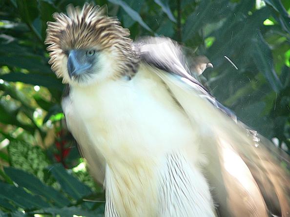 Davao Ruffled Feathers Sanctuary