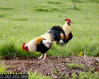 History #14 de F6IKY