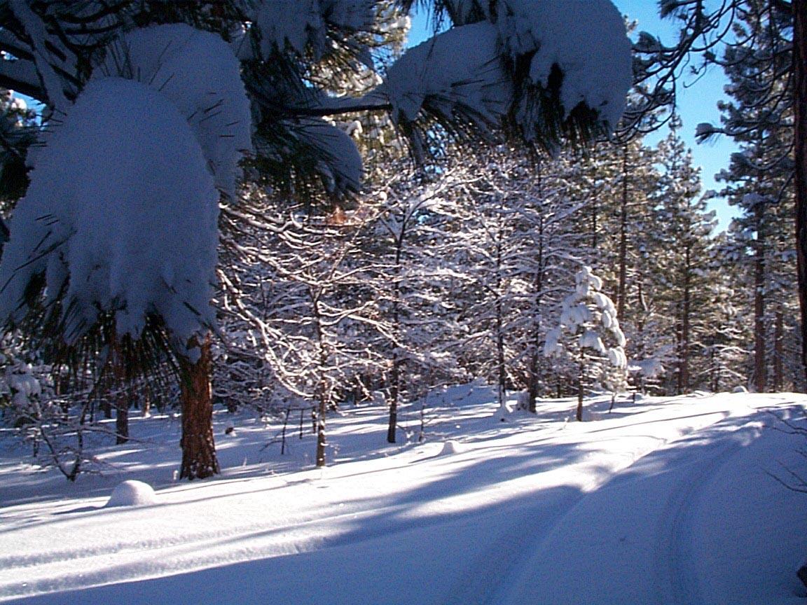 Susanville Snow