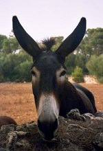 Do you                     QSL via burro?