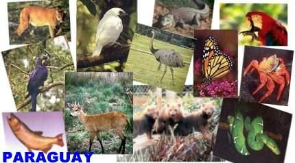 Animales nativos del Per para colorear  Imagui